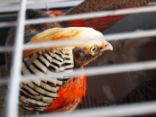 bird-in-cage-jpg