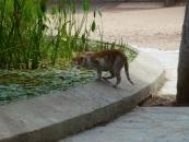 cat-drinking-in-fountain-jpg