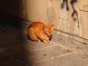 cat-enjoying-sunshine-jpg