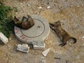 cats-resting-jpg