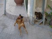 dog-and-cat-jpg