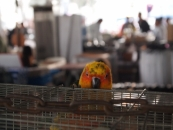 pet-market-jpg